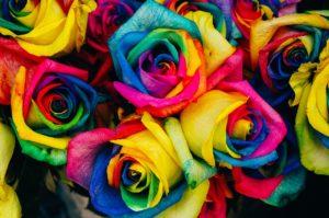 regenbogen rosen